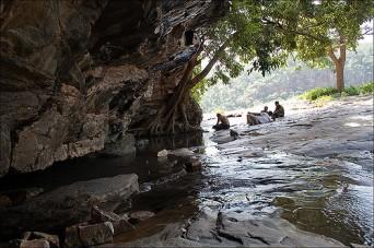 Long Walking Ahobilam Narasimha Swamy05